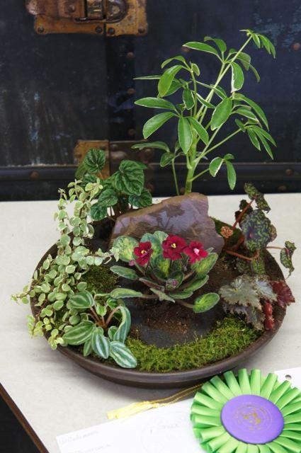 WAVS 2013 Show Best Dish Garden Design